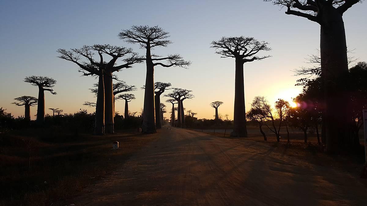 Madagaskar - Země krále Jelimána