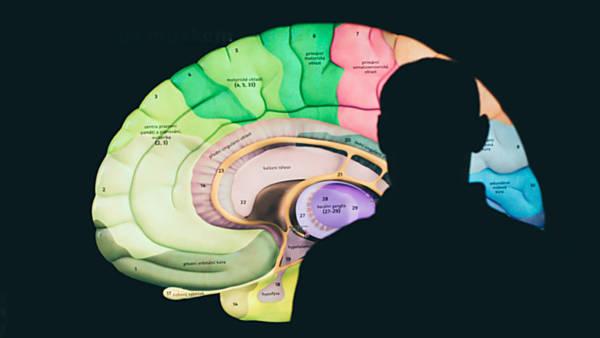 Dny mozku v Pevnosti poznání