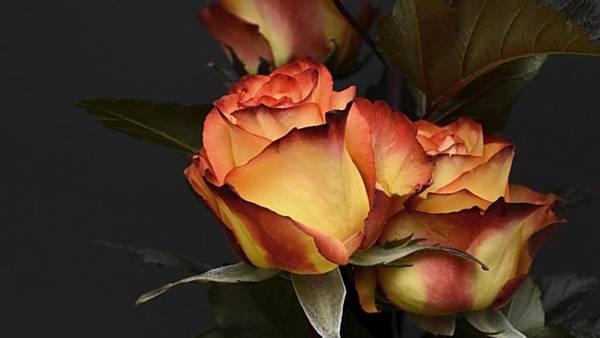 Květiny pro zámeckou paní