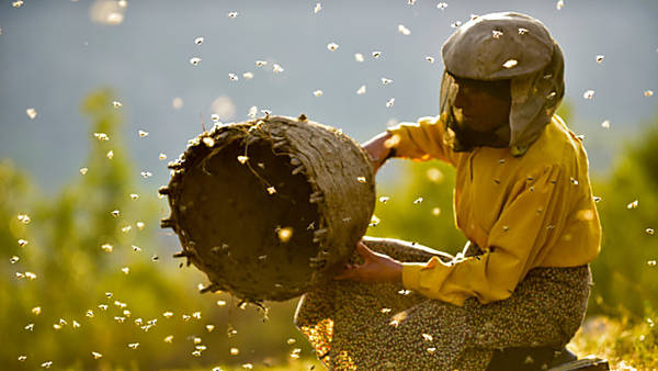 Jeden svět 2020: Země medu