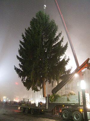 Kmen stromu prodej