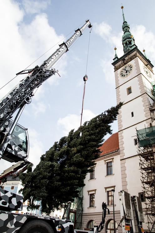 Zatím bezejmenný strom nepatří k největším, jaké kdy na náměstí stály. Měří sice jen dvanáct metrů, je ale krásně rostlý.