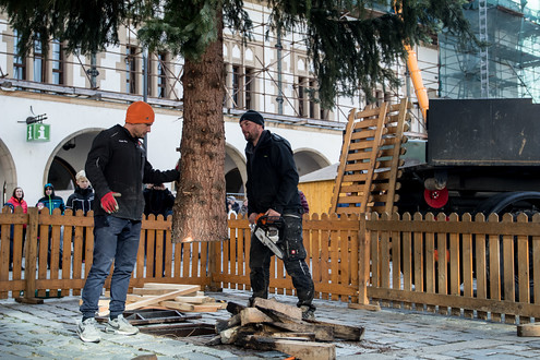 Letošní strom pochází z Postřelmova a jako již tradičně se jedná o dar městu. Tak jako tak by ho totiž čekalo pokácení. Než skončí na špalky, užije si aspoň pár měsíců slávy.