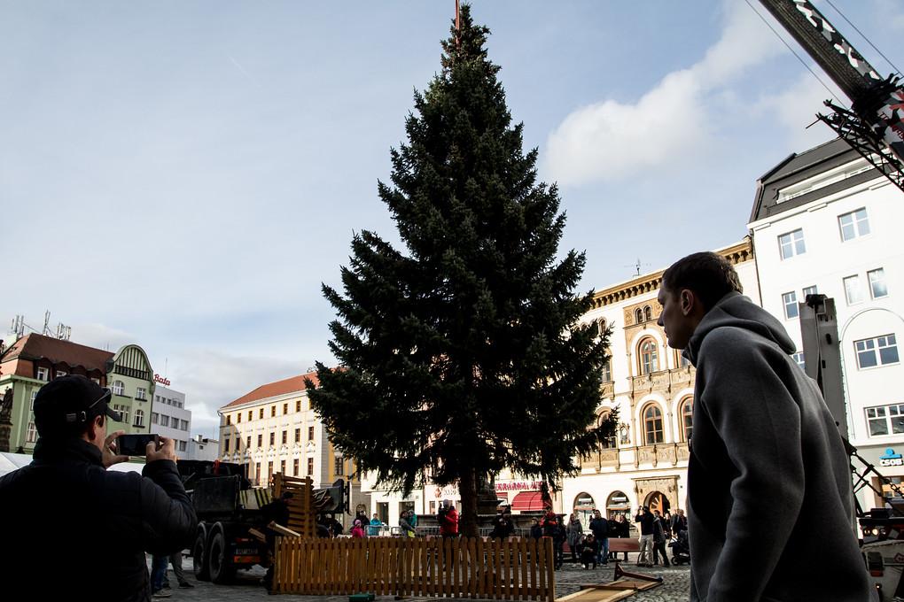 Zlí jazykové se ušklíbají, že do Vánoc je ještě hodně daleko. Olomouc však není jediným městem, kde už strom stojí. Dnes ho instalují třeba i v Plzni.