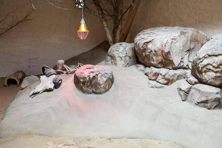 Návštěvníci se přenesou do horkého klimatu africké pouště. A to téměř doslova. Uvnitř se udržuje příjemné teplo.